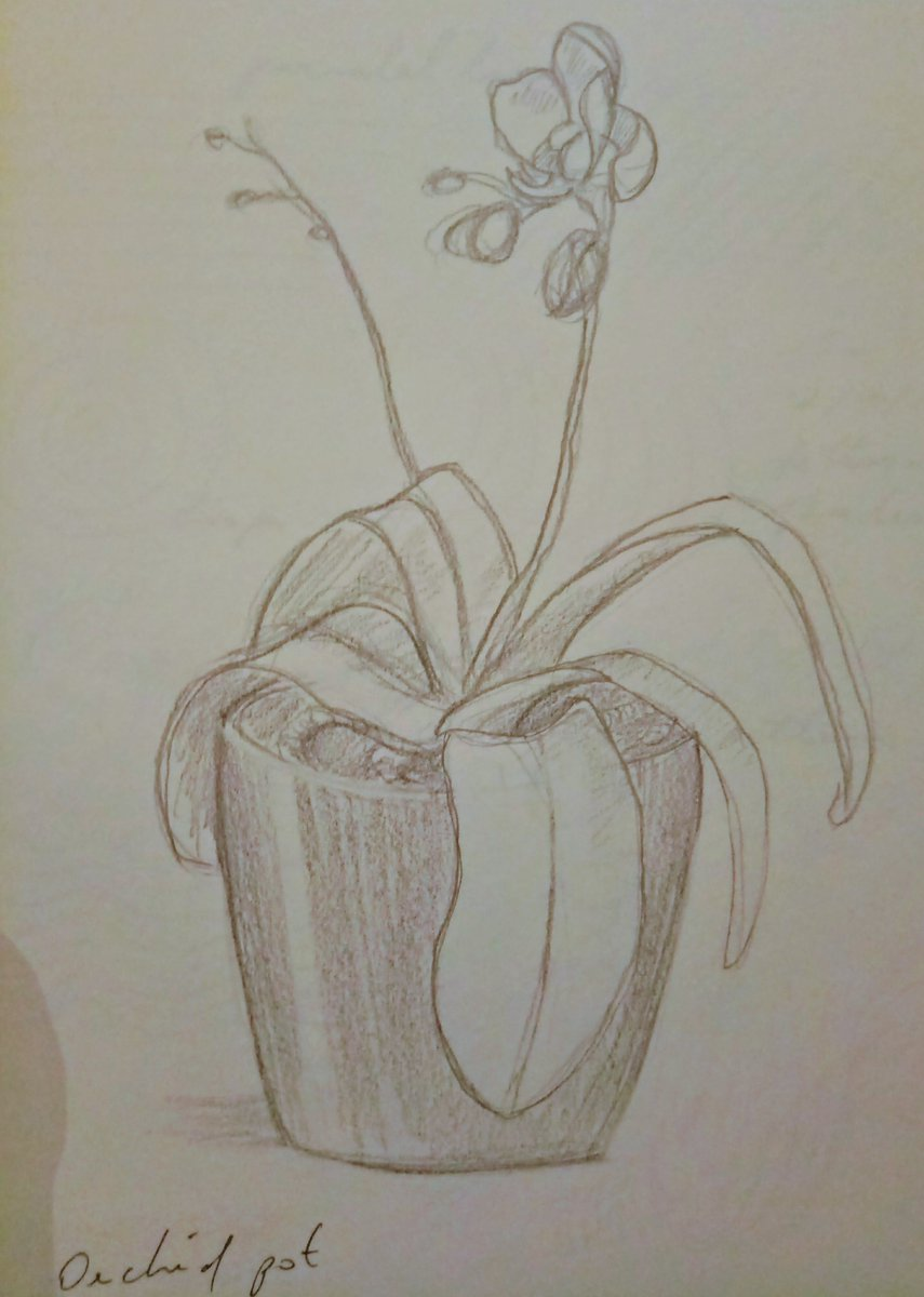 Here&#39;s a drawing of one of my dearest plants. I never share drawings, maybe it&#39;s my crippling self-hate #dothething #100followers <br>http://pic.twitter.com/Oa38Ee5HcE