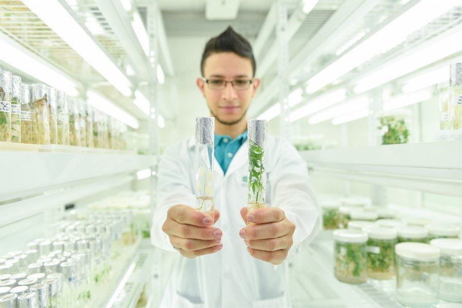 RT @CIAT_ With #GenomeEditing, plant bre...
