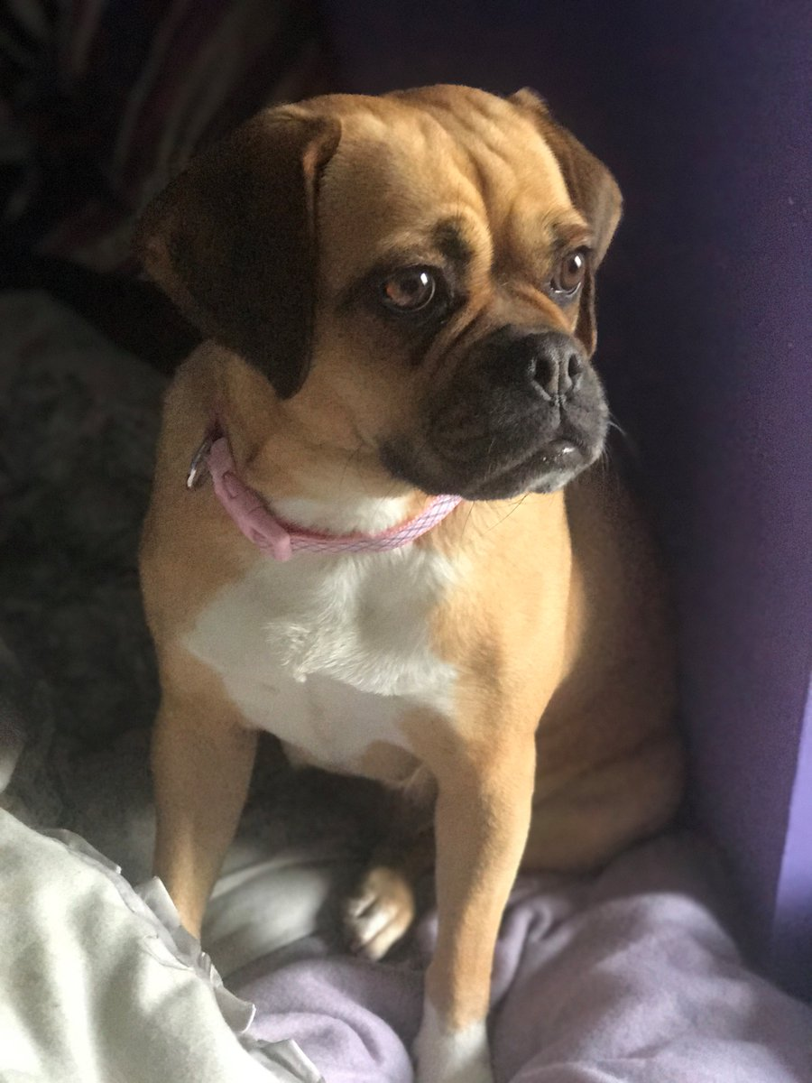 #Lost #ScanMe Cross Breed Female  #HardcastleCrags #HebdenBridge #WestYorkshire #HX7   #HX1 #HX2 #HX5 #HX6 #LS22  http://www. doglost.co.uk/dog-blog.php?d ogId=120911#.WeOgRbqOWc8.twitter &nbsp; … <br>http://pic.twitter.com/XDg13qoLj5