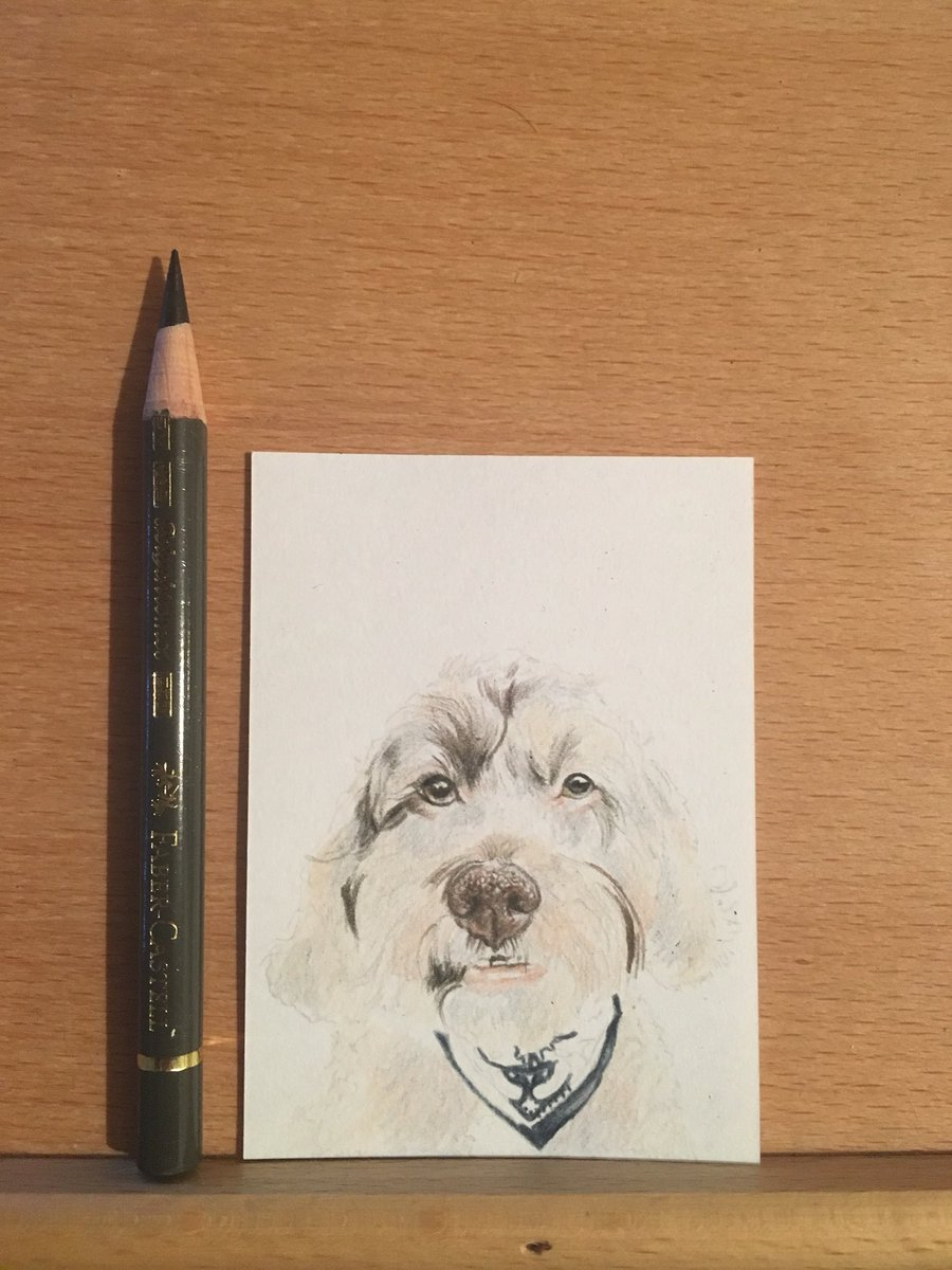 don't usually work with colour this small so it's a challenge!   #charity #childhoodcancer #dog #portrait #pet #auction #prize #fundraising<br>http://pic.twitter.com/Aes9jT1oKk