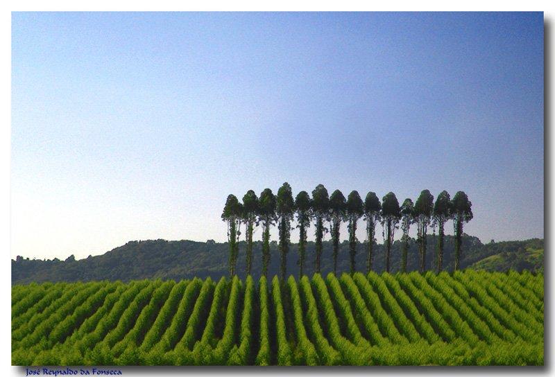 #Eucalyptus plantation #Avaré #SãoPaulo state #Brazil #SouthAmerica Photo: Jose Reynaldo da Fonseca   http://www. trekearth.com/gallery/South_ America/Brazil/Southeast/Sao_Paulo/Avare/photo659542.htm &nbsp; … <br>http://pic.twitter.com/ZLYefkap2z