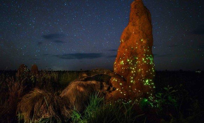 Brasileiro é premiado no principal concurso de fotografia de natureza....