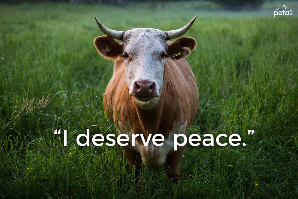 Spread peace & kindness ✌️ Go #vegan...
