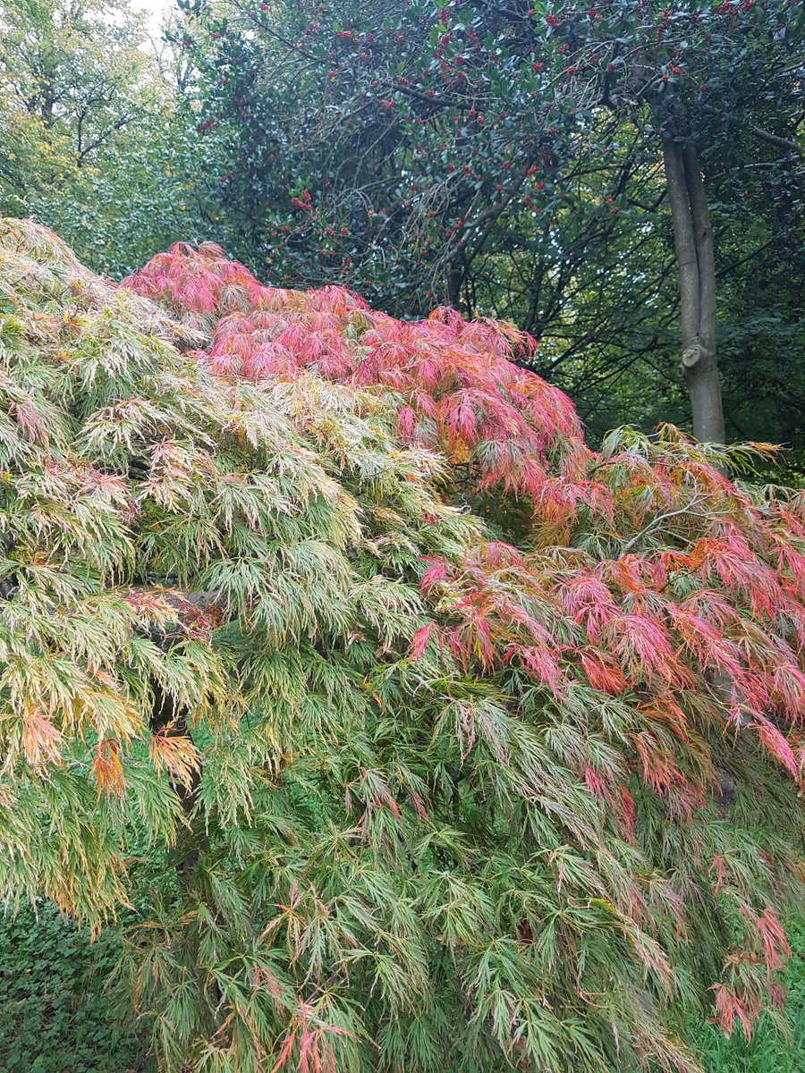 Walked on the russet ground in Bute Park, #Cardiff, to admire #autumn&#39;s pallet. #Thoughts drifted to promise of the festive season. #Hygge<br>http://pic.twitter.com/FU6JRgYJhJ
