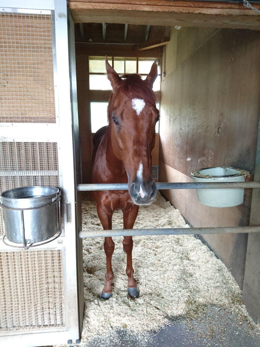 山内厩舎で、1頭の栗毛の馬が雨具をずっとハミハミしていた。かわいい。『この馬誰ですか?』『それサンマルホーム!』マジかよ名馬じゃん。『なぜか人気あって、ファンレターが届くんですよね…』さすがに笑った。10月で一番笑った。 https://t.co/8OQDd1yT0i