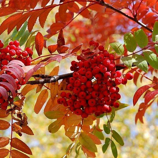 Листья желтые над городом кружатся скачать минусовку бесплатно