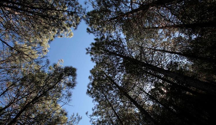 #Sociedade Governo prepara pacote de medidas para florestas https://t.co/k6el5chomk Em https://t.co/MDmhqgtnSp