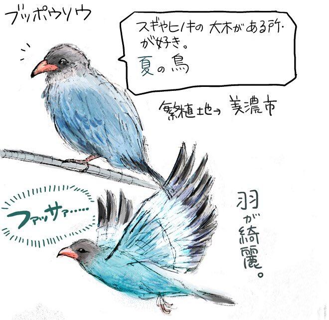 無料ダウンロード 鳥 イラスト 綺麗 壁紙イラスト