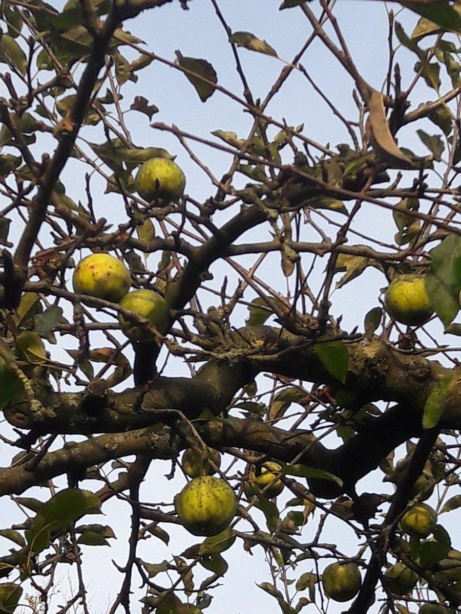Er zijn #appeltjes die er gewoon niet af willen...