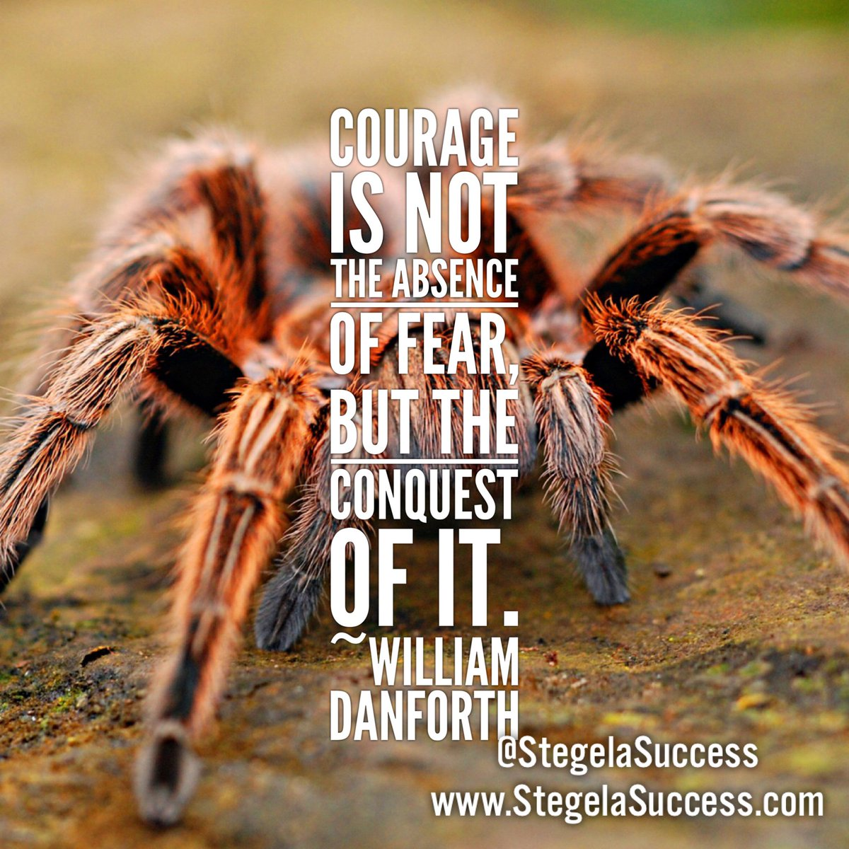 Will you overcome your fear? #stegelasuccess #success #successthought #motivation #inspiration #conquer #fear #quote #quoteoftheday<br>http://pic.twitter.com/n99gBeWrLB