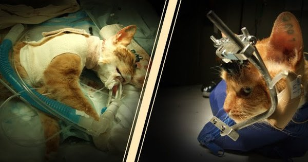 Help to make animal testing illegal in A...