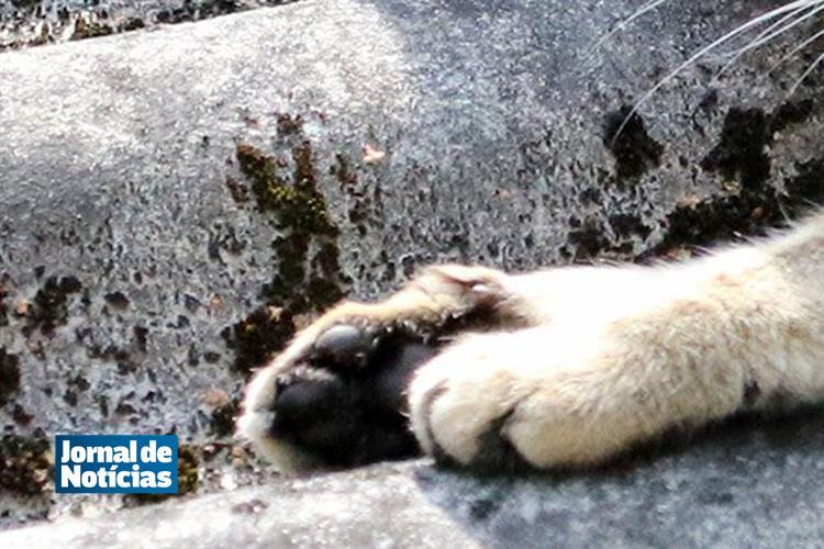 'Tinha de estar doido', diz homem acusado de estrangular gata https://t.co/1Vw4OWmPkn
