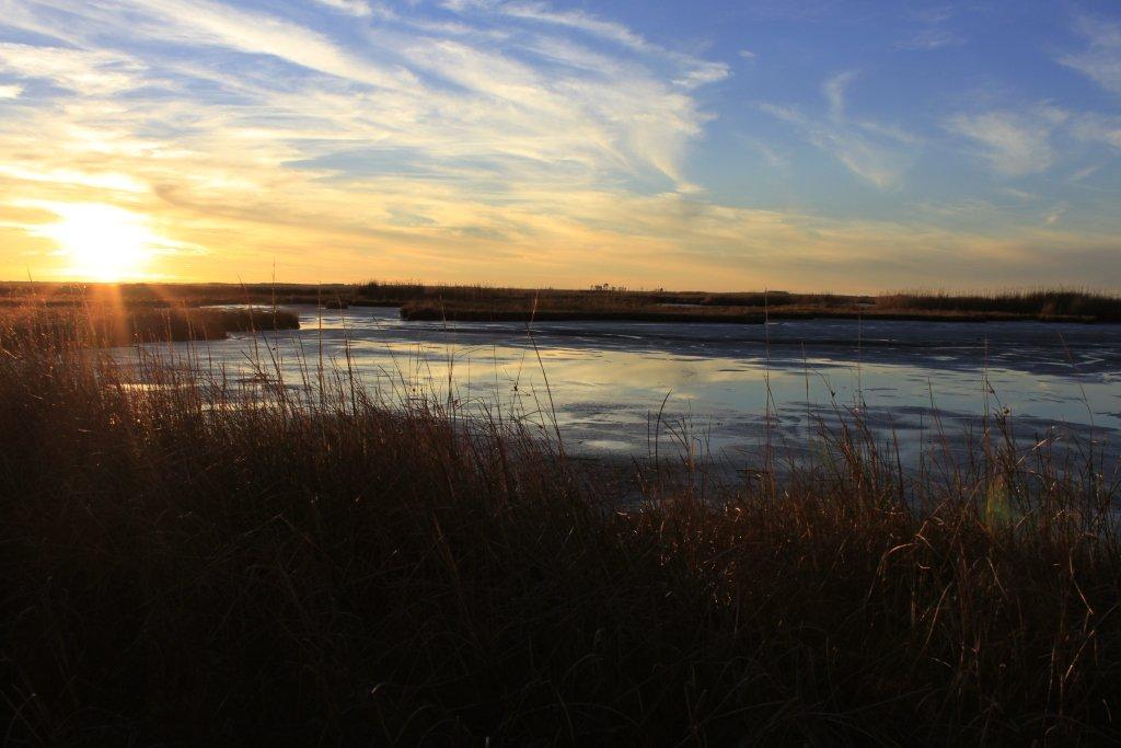 Taking marsh restoration to a newlevel...