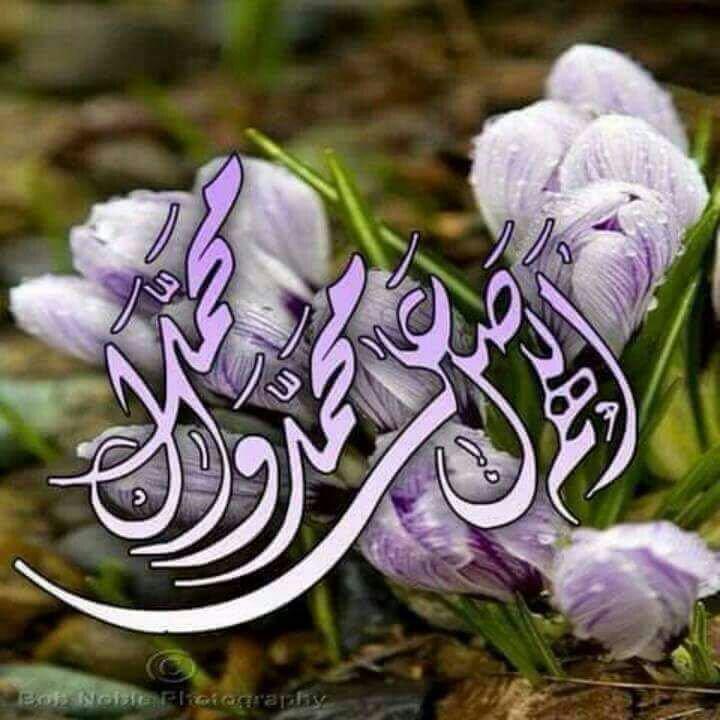 سجلوا حضوركم بالصلاة على محمد وآل محمد - صفحة 2 DMh3EhsX4AA1Ich