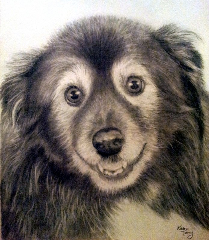 Here&#39;s one I did of a beloved pet #pencildrawing #animalportrait<br>http://pic.twitter.com/koE8jDkQFj