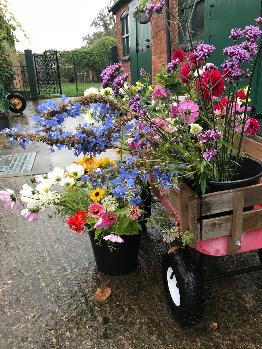 Some flowers this week for fleur de rue of Stroud! Always happy to supply florists!  #local #British @Kate's Patch<br>http://pic.twitter.com/HCPChATyzm