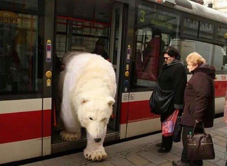 - Veuillez descendre du bus  - Pfoua a croire Cergy - Pole Nord c\'est un truc de fou un detour c\'est rien