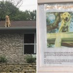 This is why you need Digital Daycare. Your dog could be on your roof.  *Dog in the photo is safe. Don't try this at home.