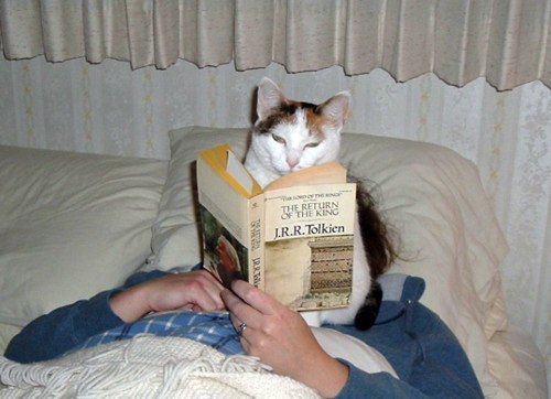 Since you&#39;re blocking my view I have to trust you&#39;re #reading the text and not just making it up as you go on!    #hobbit #cats<br>http://pic.twitter.com/S3G0BsgUAc