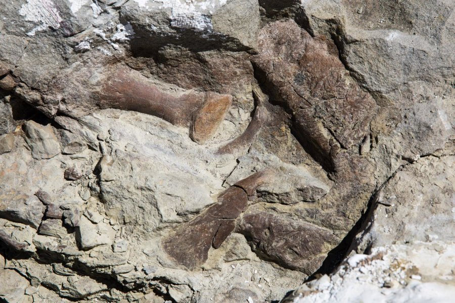 New tyrannosaur fossil is most complete found in Southwestern US https://t.co/dbwmmyWzZi https://t.co/gBqceC1pt9