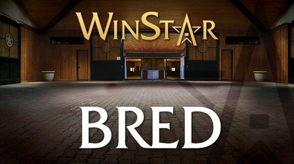 Winstar Farm 2018 Aşım ücretleri