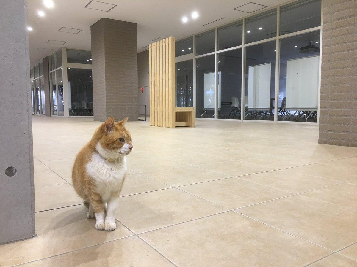 なんでもいいからとりあえず自由すぎるうちの大学のネコ様を見てくれ