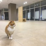 なんでもいいからとりあえず自由すぎるうちの大学のネコ様を見てくれ pic.twitter.com/y…