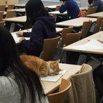 なんでもいいからとりあえず自由すぎるうちの大学のネコ様を見てくれ pic.twitter.com/y5Vv4t7SiD