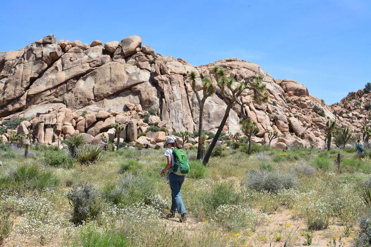 #IfICouldDoAnythingId hike every trail in Joshua Tree! https://t.co/Oa...