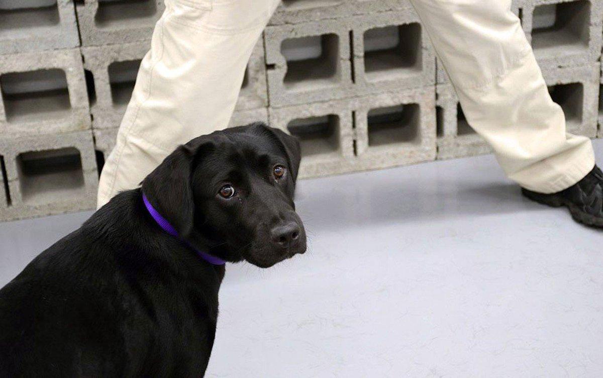Cachorra é demitida pela CIA por falta de interesse no trabalho https://t.co/hfLqR4XC7M #G1