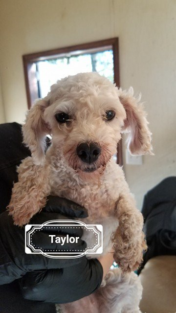 Rescue #TAYLOR soon! #urgent She&#39;s the sweetest! #PetRescue   https://www. petfinder.com/petdetail/3969 0835 &nbsp; … <br>http://pic.twitter.com/W70PBFZBe4