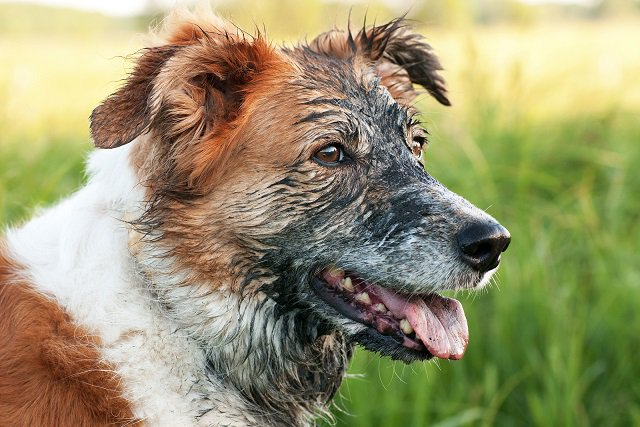 Understand a Dog&#39;s Digging Habit and How To Stop Dogs From Digging  http:// bit.ly/2uW32df  &nbsp;   #dogbehavior #digging<br>http://pic.twitter.com/7WCi9sEkzi