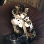 人をダメにするソファーで猫が猫を辞めてるので、「しっかりしろ種族を忘れるな」と叱ったところ反省したの…