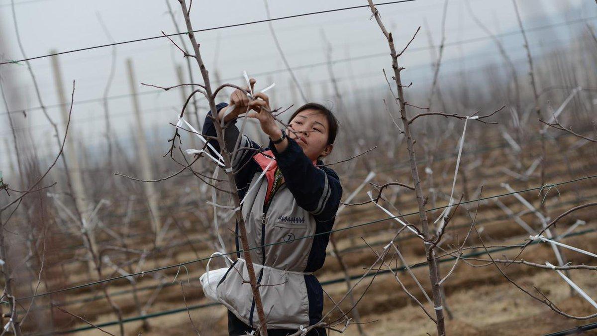 Corée du Nord (5/10) : la famine est-elle toujours une réalité dans le pays ? https://t.co/AC7JjQlSwH