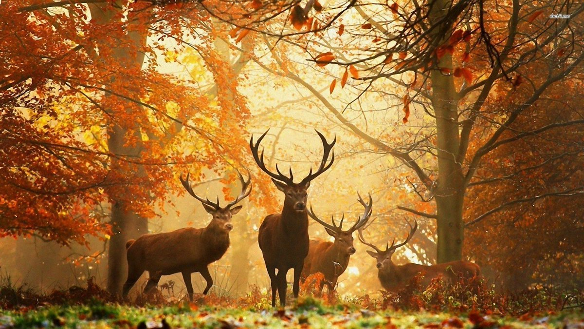 Travelspoc on twitter amazing wild life travel - Nature wallpaper status ...
