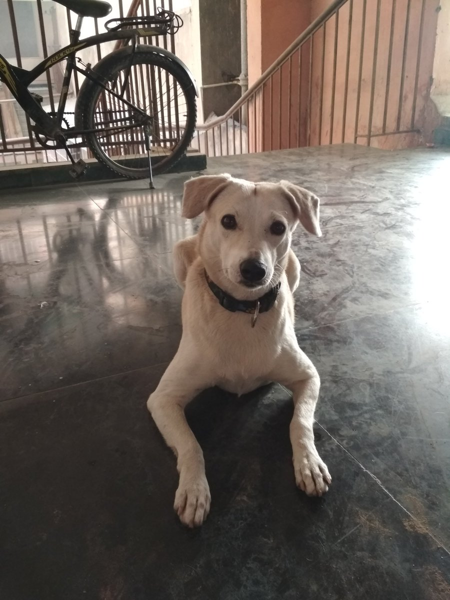 Got a visitor last night She has a belt with paws on it Very friendly &amp; quiet Think is lost Pls RT #Help to find owners Vasant Kunj, Delhi <br>http://pic.twitter.com/OkGtP3d1q5
