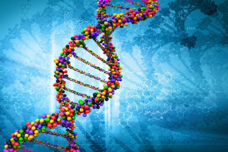 анализ ДНК на триппер
