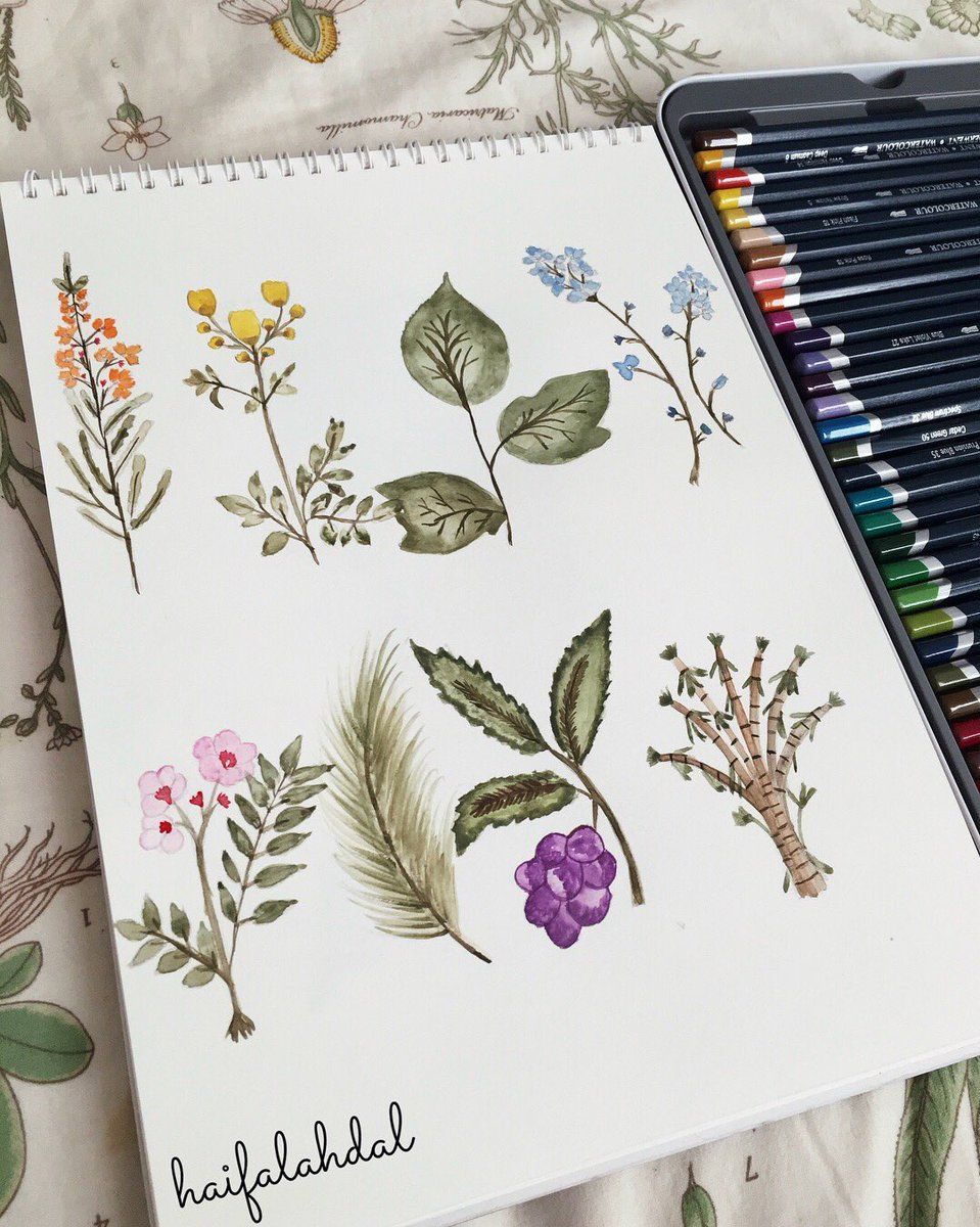 Practicing  #waterblog #art #artist #plant #watercolor #artwork #drawing  #sketching #illustrator #aquarelle #رسم #رسمي<br>http://pic.twitter.com/NWrhILt91Y