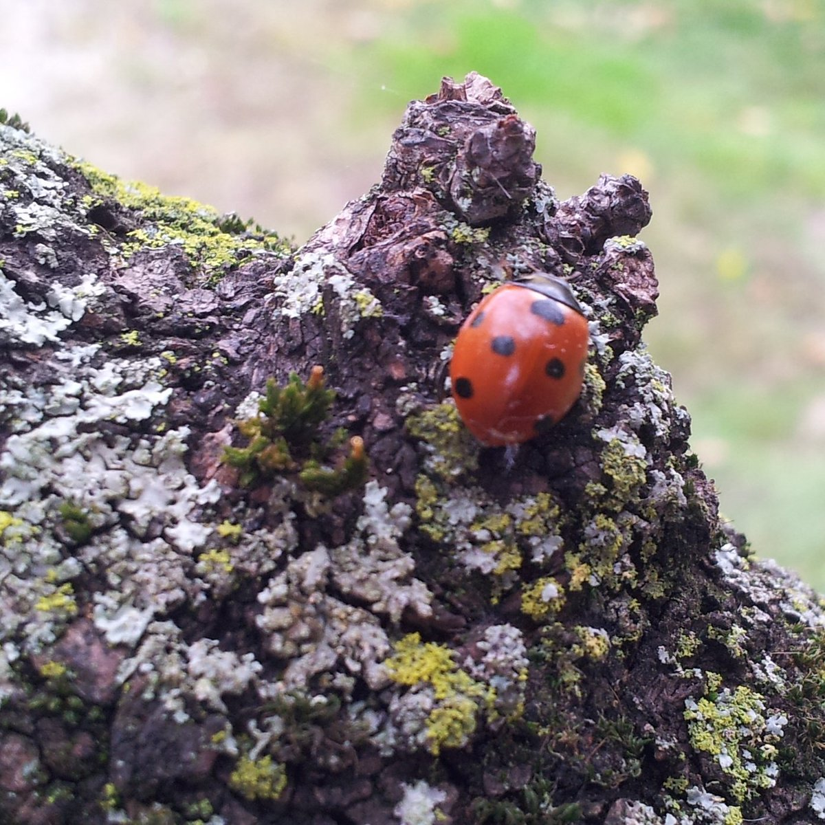 The #path of #knowledge is always steep, but it is always #worth to be explored (even for a #ladybug)! <br>http://pic.twitter.com/Z6LL42GK2t
