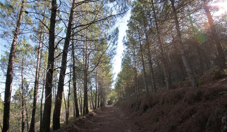 #Sociedade Cadastro da floresta arranca a 1 de novembro https://t.co/R6QQsEVyjC Em https://t.co/MDmhqgtnSp