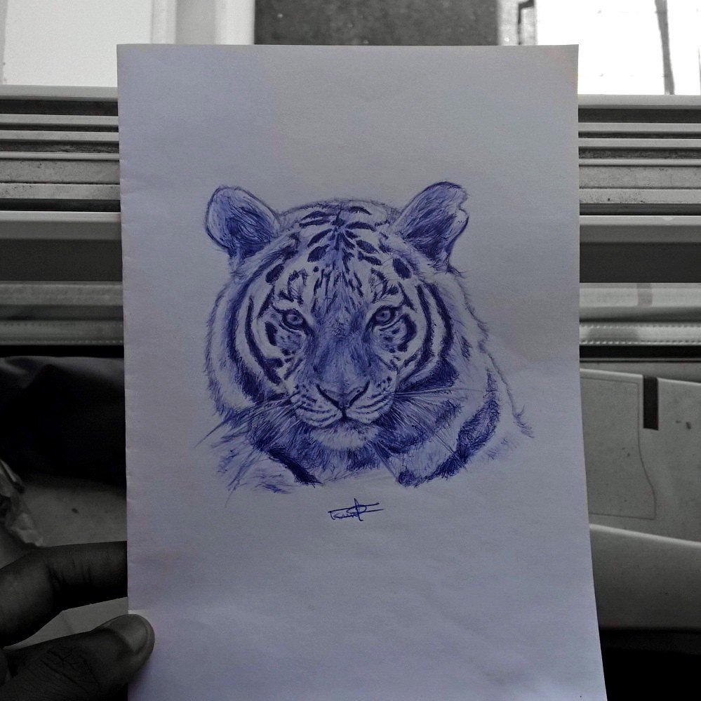 Flashback to my Tiger drawing from last year  #tiger #cat #pendrawing #penart #Bic #biro<br>http://pic.twitter.com/IKTvwEmqmf