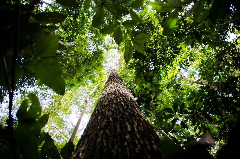 PIB para medir tamanho do patrimônio ecológico do Brasil vira lei. https://t.co/cYNN1FHaSs 📷 Marcelo Camargo/ABr