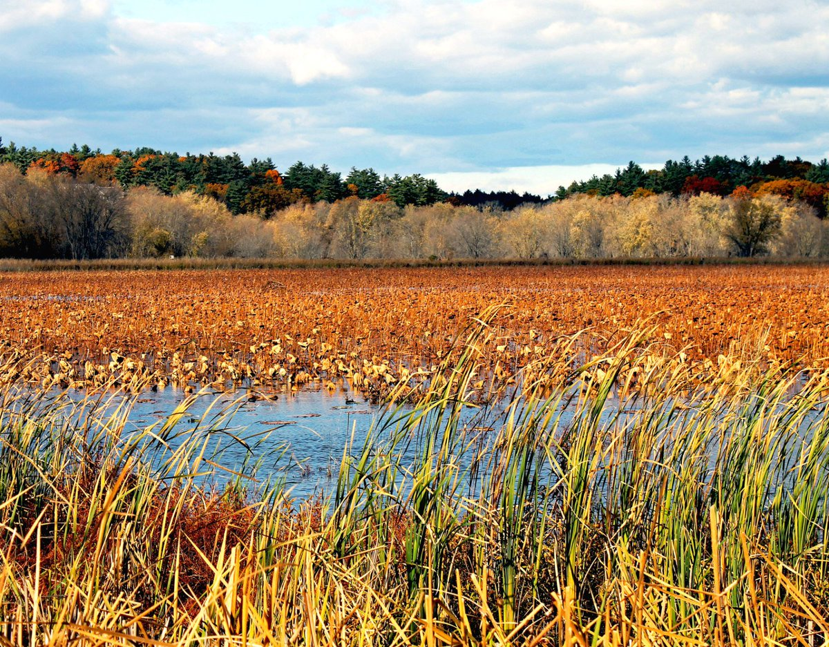 Lovely fall afternoon at Great Meadows #...