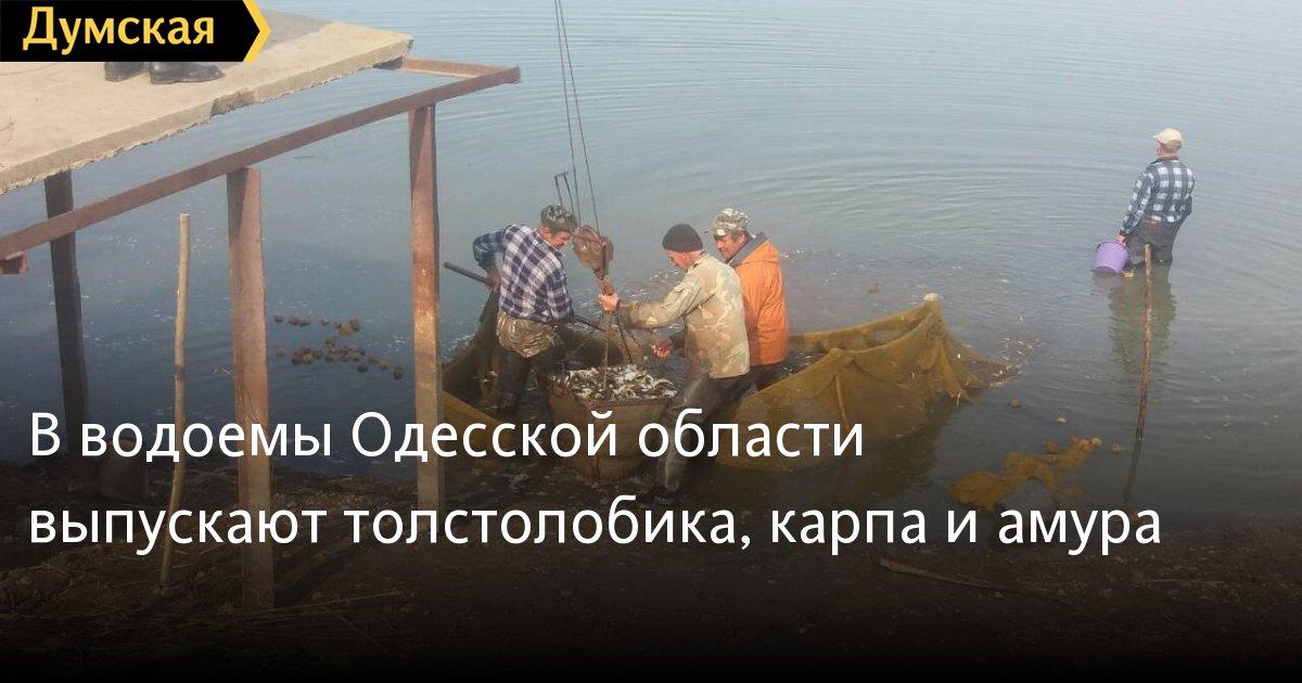 томат сибирский гигант фото и описание