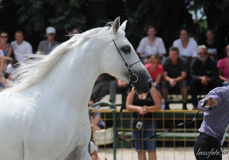#all-the-horses.gazal.  Arabian horses.#...