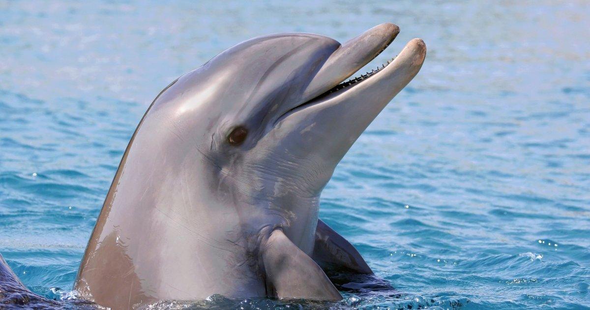 Identificate almeno 5 'parole' dei delfini. Parlano tra loro come umani e comunicano anche con le balene https://t.co/LY31tj14EW