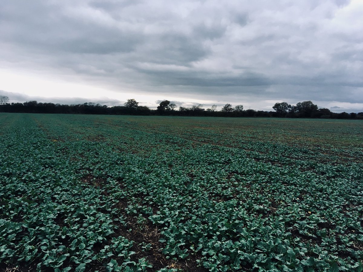 So the working day gets shorter! #OSR #autumn2017 #agronomy <br>http://pic.twitter.com/5LAHiSLwK0