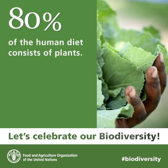 over human diet is provided by plants.