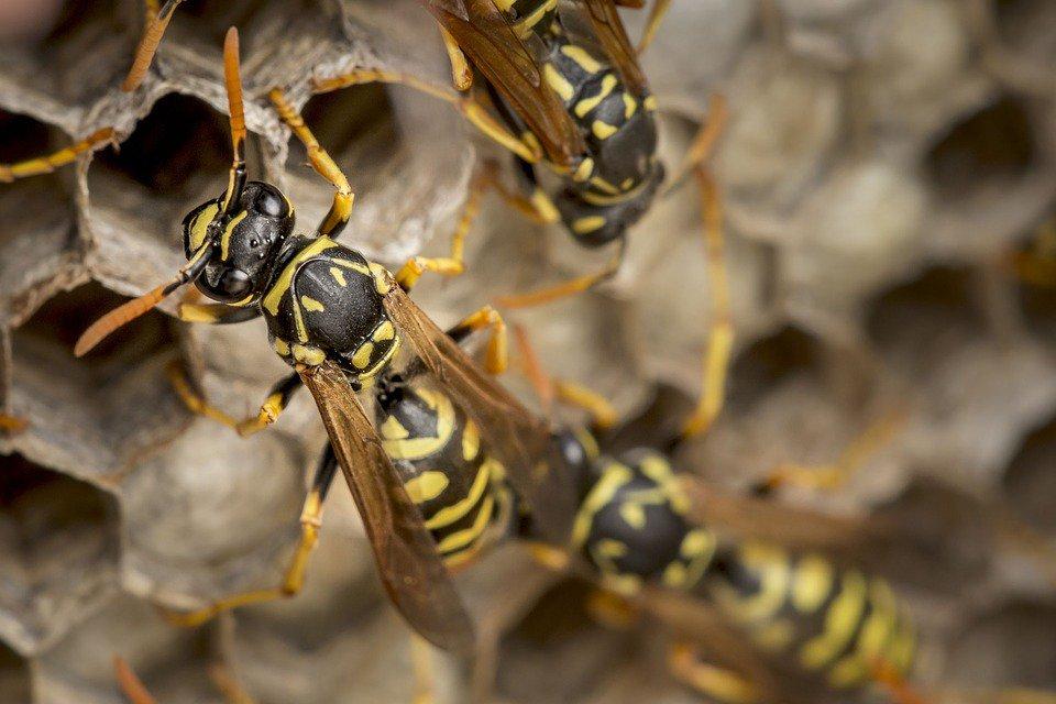 Buscan proteger a las abejas que han sid...