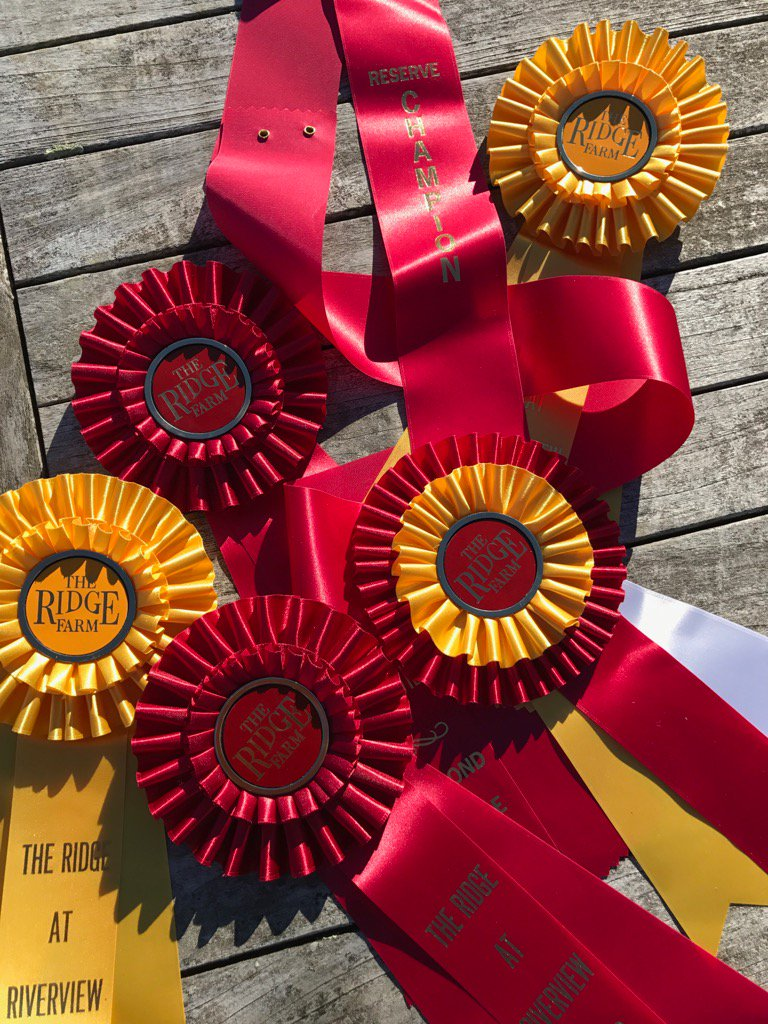My horse Lion &amp; I won these pretty ribbons today!  #Psyched! <br>http://pic.twitter.com/FOYxIGg1pr